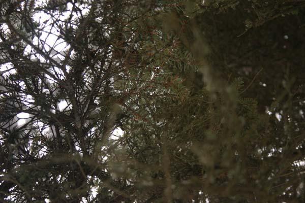 Through_the_branches