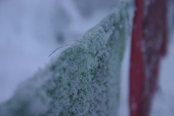 Frosty_flag