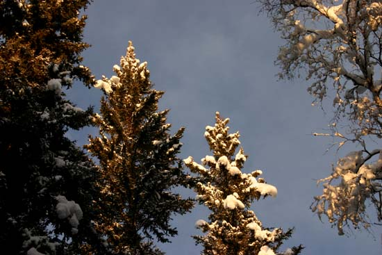 Treetops1_2
