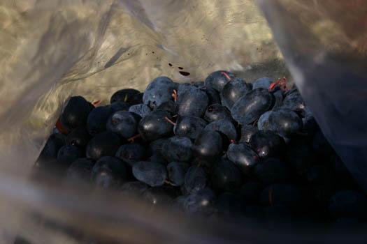 Berries_copy_1